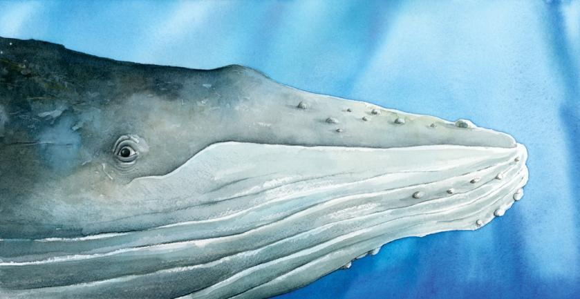 Whale_p2-3